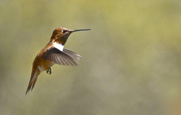 17874-hummingbird-close-up-pv.jpg
